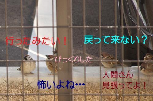 080_20120329214527.jpg