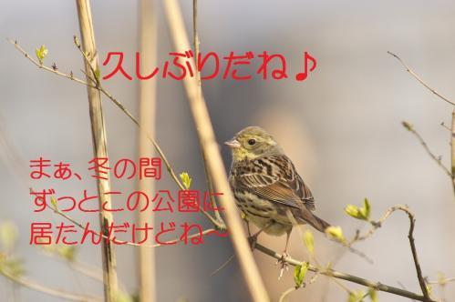 080_20120408223936.jpg