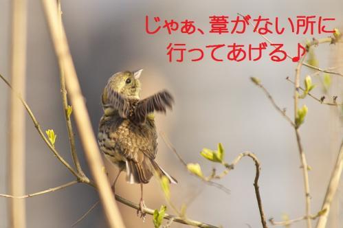 090_20120408223936.jpg