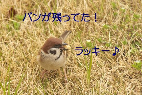110_20120331193647.jpg
