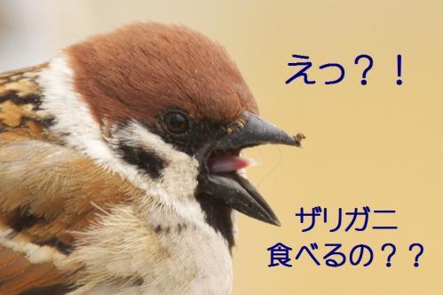 110_20120402223634.jpg