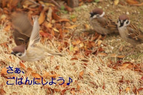 120_20120328213539.jpg
