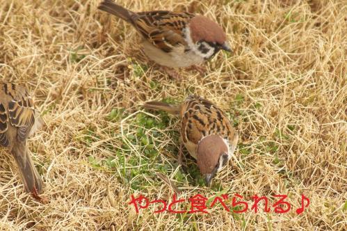 130_20120328213539.jpg