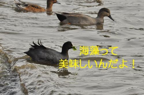 130_20120402223743.jpg