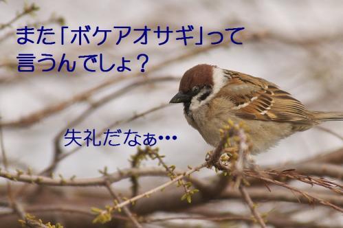 180_20120408224859.jpg