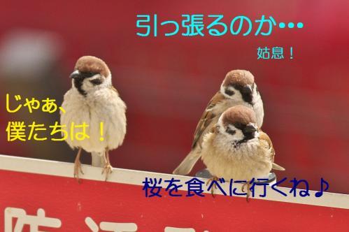 220_20120408224857.jpg