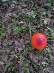 プチトマト?