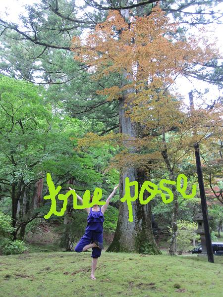tree pose in nikko