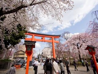 平野神社 (2)_R