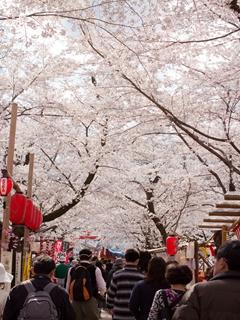 平野神社 (3)_R