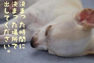 mugitora_005.jpg