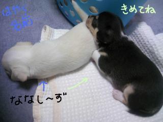 shirokuro.jpg