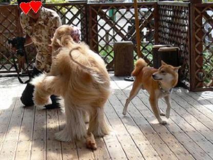 踊ってるね!