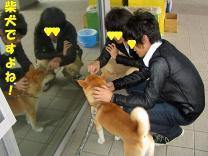 柴犬ですよね~!