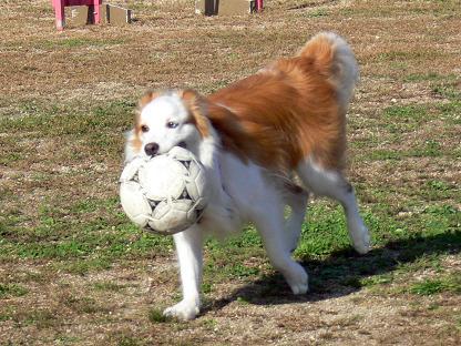 ボール取って来たよ!