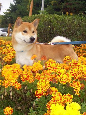 花畑の中で・・・