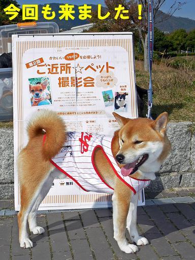 ご近所☆ペット撮影会