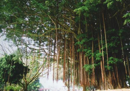 ハワイ島3