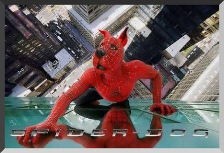 spiderwanm98