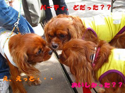 IMG_0410-1.jpg