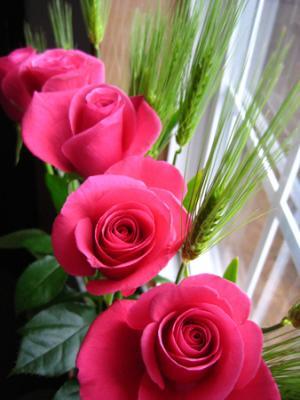 バラとムギ 2