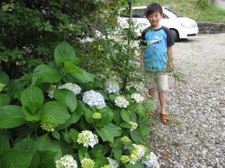 広大君と紫陽花