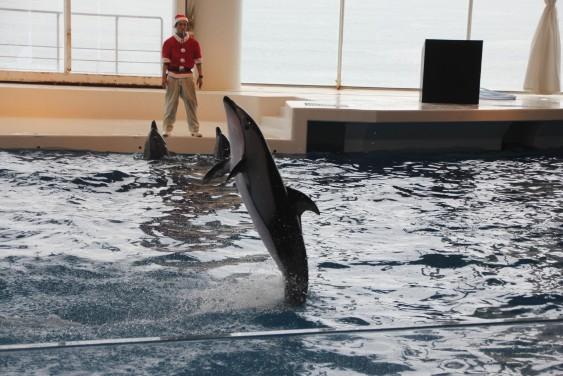 イルカの立ち泳ぎ