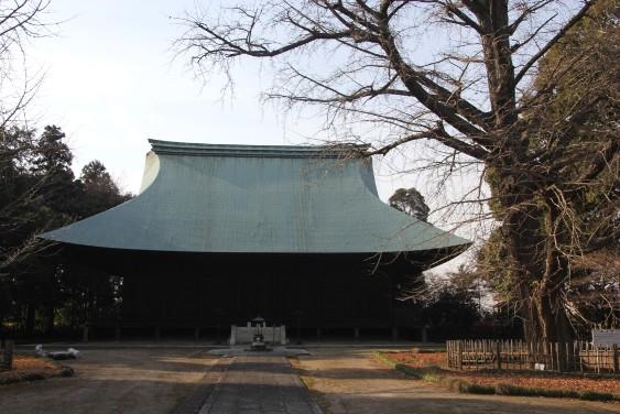 本堂と銀杏の木