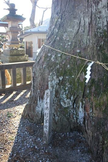 だき灯籠の杉