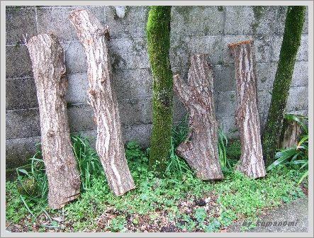 シイタケの木