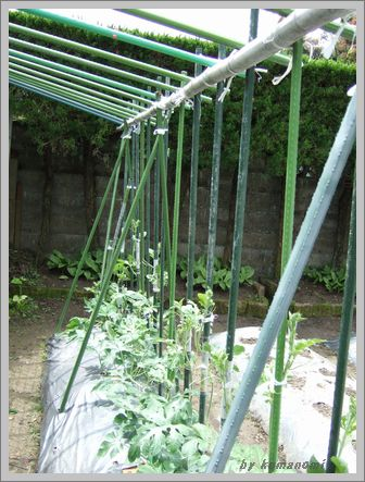 2008棚栽培