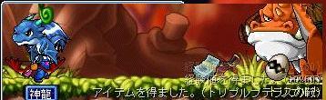 Maple0455.jpg