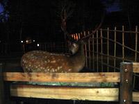 deer0725.jpg