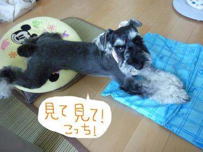 7_15+009_convert_20110715094221.jpg