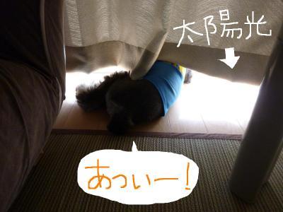 7_15+063_convert_20110715093744.jpg
