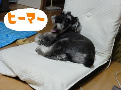 7_18+015_convert_20110718094701.jpg
