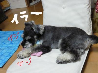 7_18+022_convert_20110718094759.jpg
