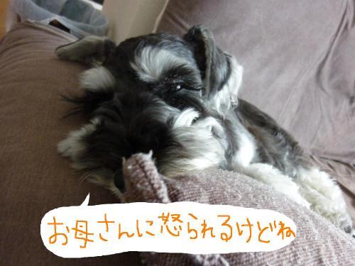7_25+006_convert_20110725082010.jpg