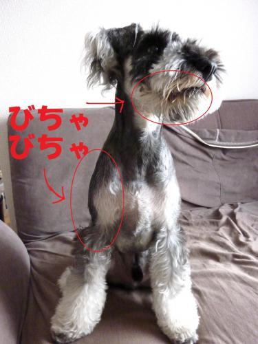7_26+002_convert_20110726083046.jpg