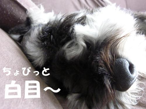 7_27+004_convert_20110727101259.jpg