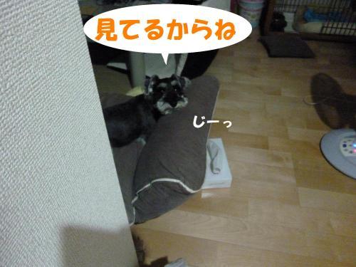 7_29+016_convert_20110729084741.jpg