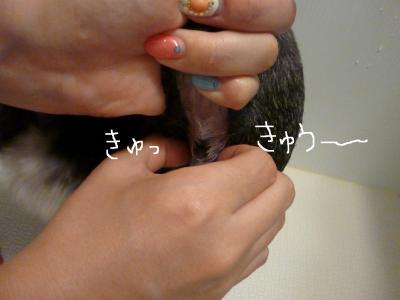 7_31+010_convert_20110801112608.jpg