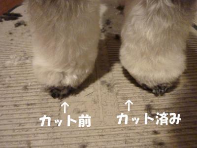 7_31+107_convert_20110802095055.jpg