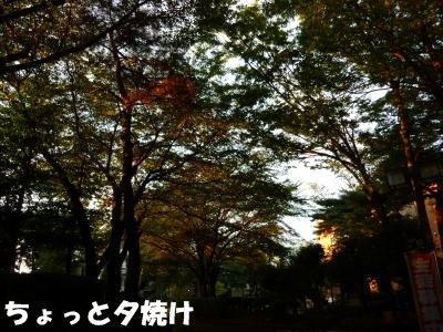8_06+011_convert_20110810085056.jpg