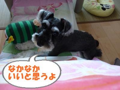 8_11+038_convert_20110811083809.jpg
