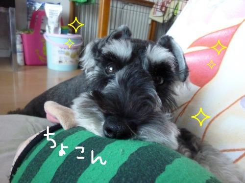 8_11+047_convert_20110811084219.jpg