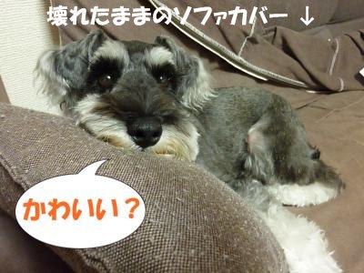8_17+001_convert_20110824123246.jpg