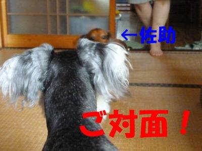 8_17+012_convert_20110817100921.jpg