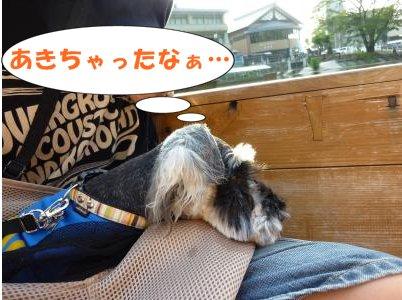 8_17+097_convert_20110819084906.jpg