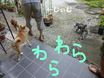 8_17+202_convert_20110817111222.jpg